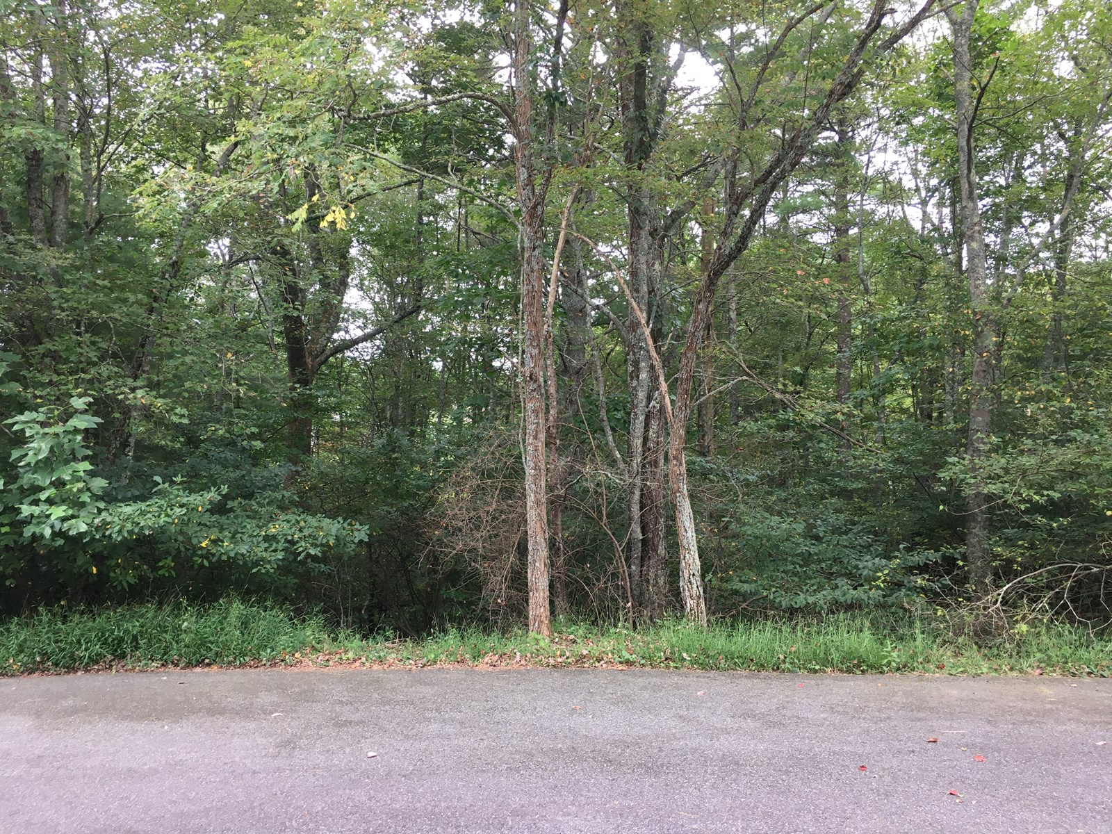 Building Lot for Sale in Laurel Fork VA