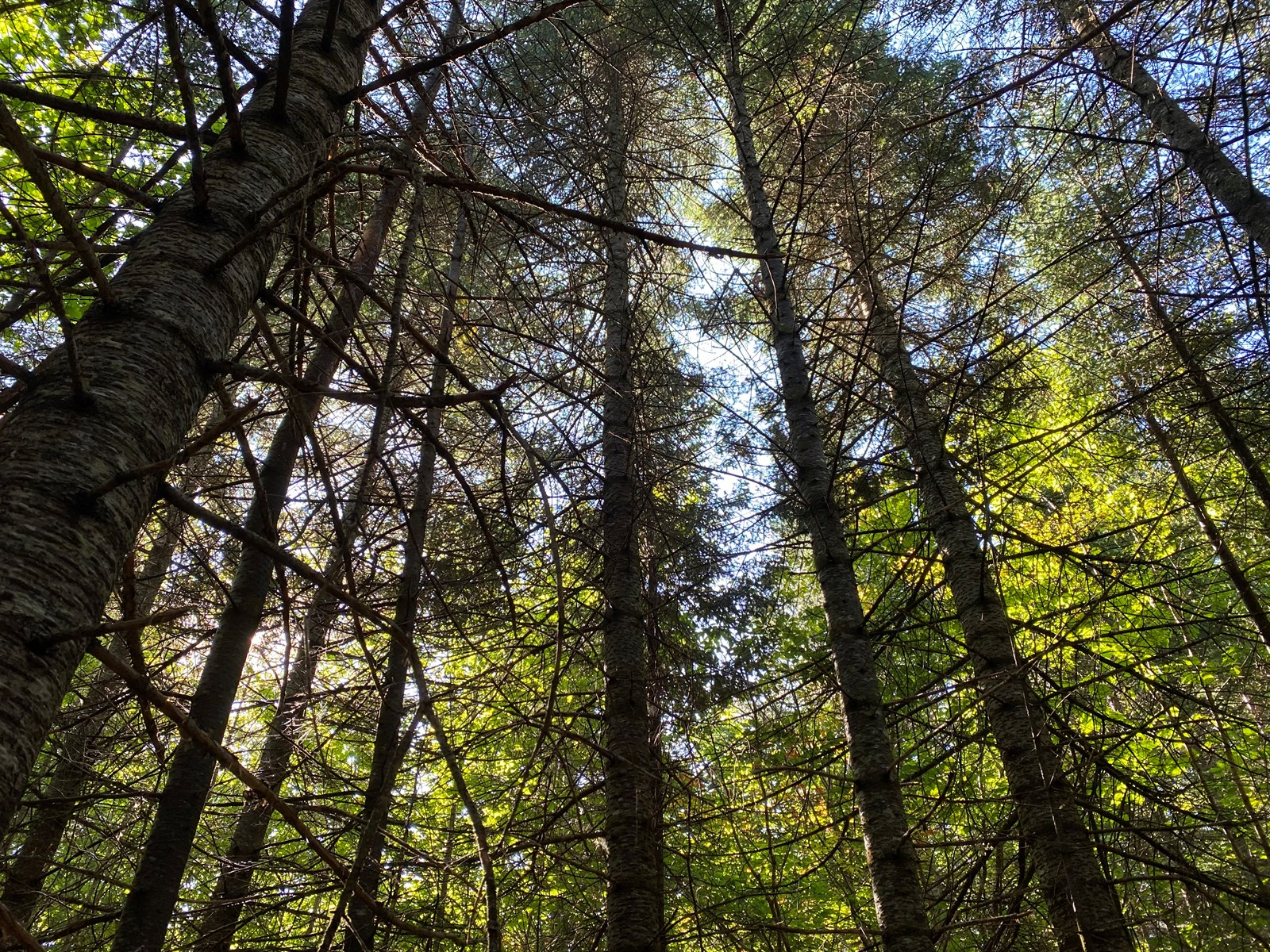 Investment & Recreational Timber Land for Sale