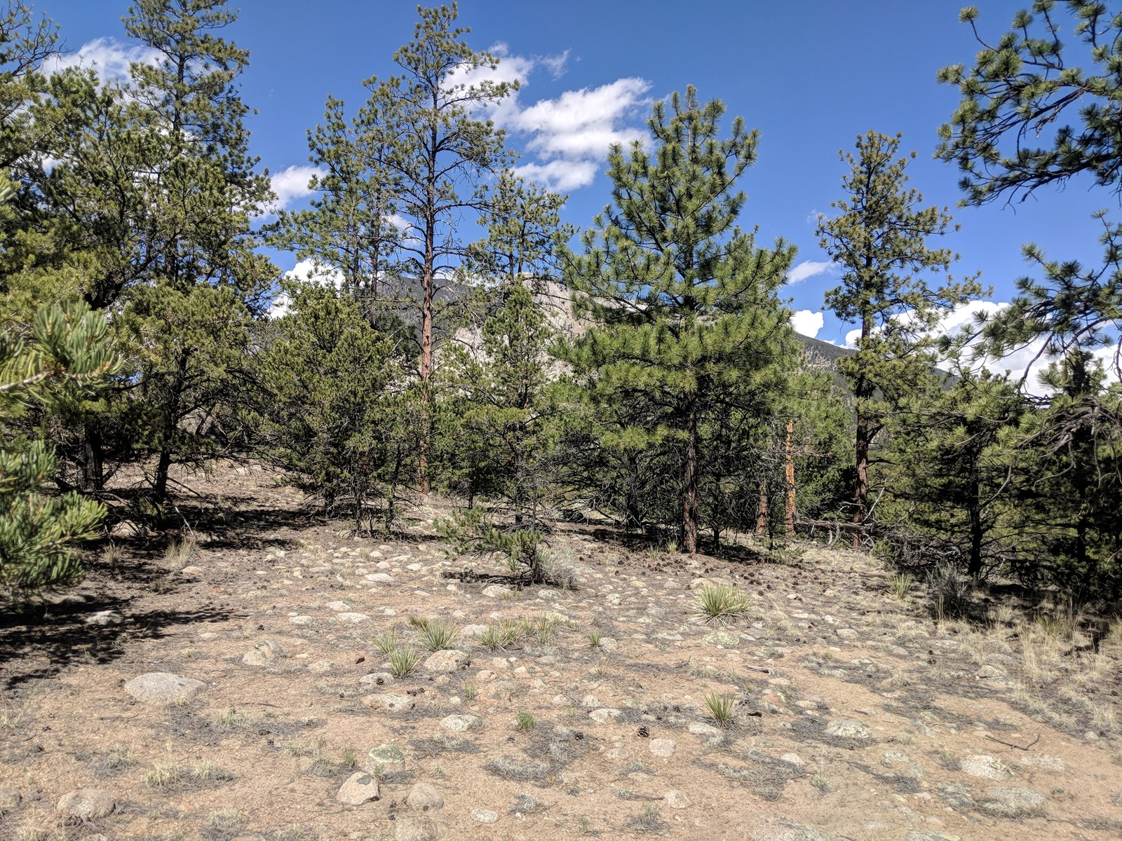 Land For Sale Mountain Mt. Princeton Chalk Cliffs Views