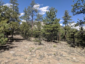 LAND FOR SALE MOUNTAIN MT. PRINCETON CHALK CLIFFS VIEWS