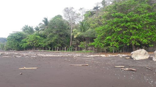 BEACH FRONT LOT FOR SALE IN CAMBUTAL PANAMA