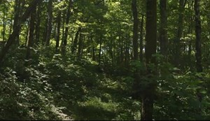 40 ACRES UNRESTRICTED LAND FOR SALE IN TAZEWELL, TN