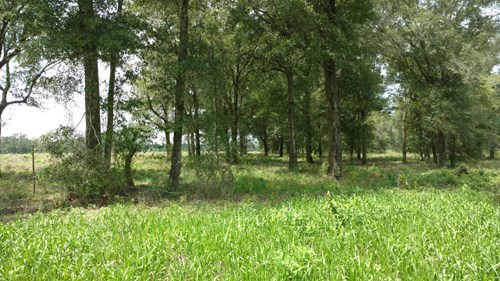 239 ACRES FOR SALE IN NORTH CENTRAL FLORIDA