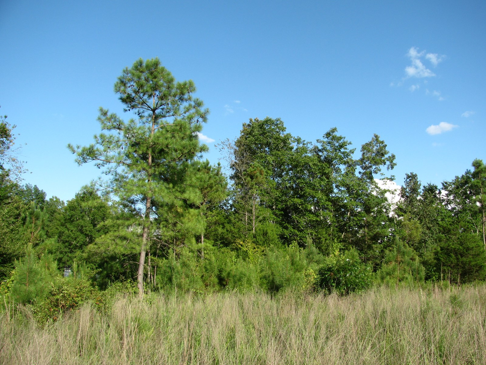 LAND FOR SALE IN MCNAIRY COUNTY, TN, 5.84 ACRES+/-