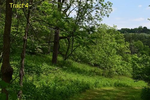 Recreational Land for Sale in Floyd VA!