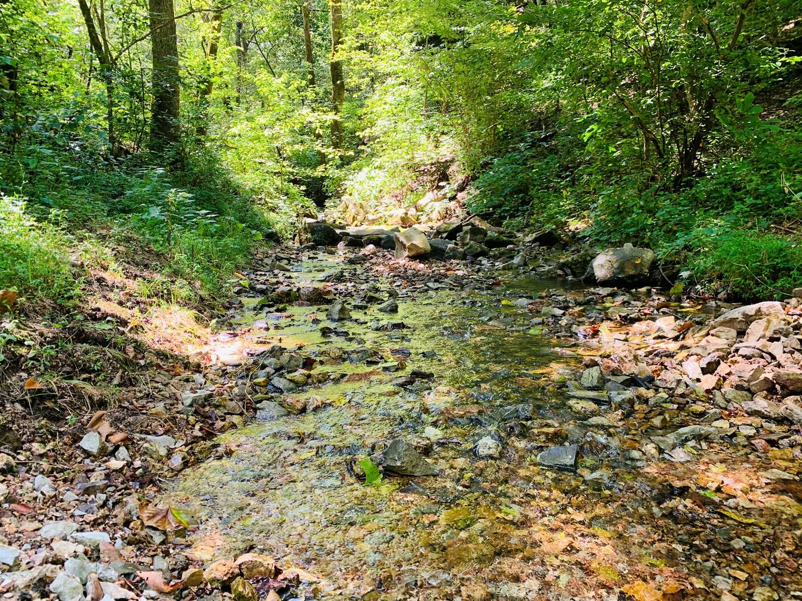 Acreage with spring fed creek in the Ozark Mountains