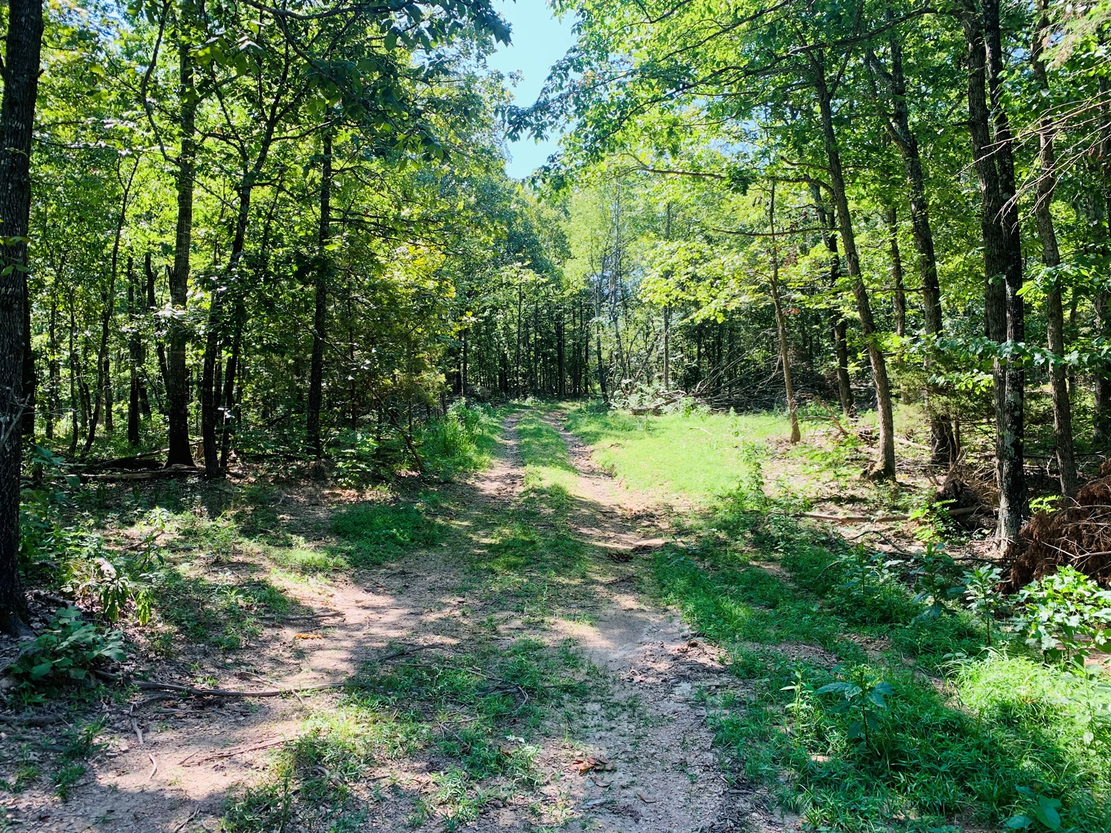 AR Acreage with spring fed creek in the Ozark Mountains