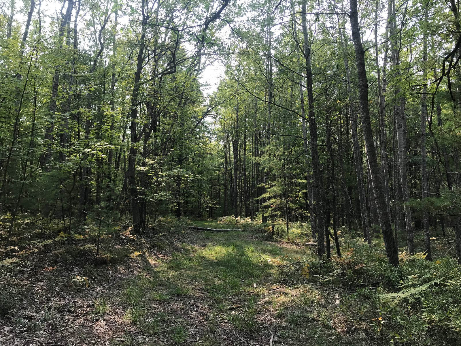 Hunting Land Rolling Wooded Hills 19.37 Acres in Atlanta, MI