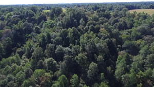 10.79 ACRES- VACANT LAND- HUNTING PROPERTY-