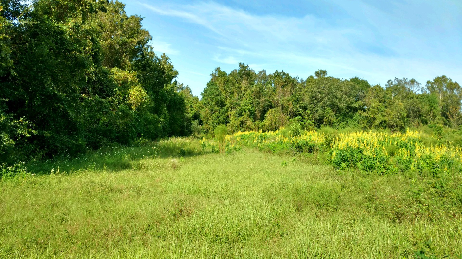 ACREAGE FOR SALE IN NORTH CENTRAL FLORIDA