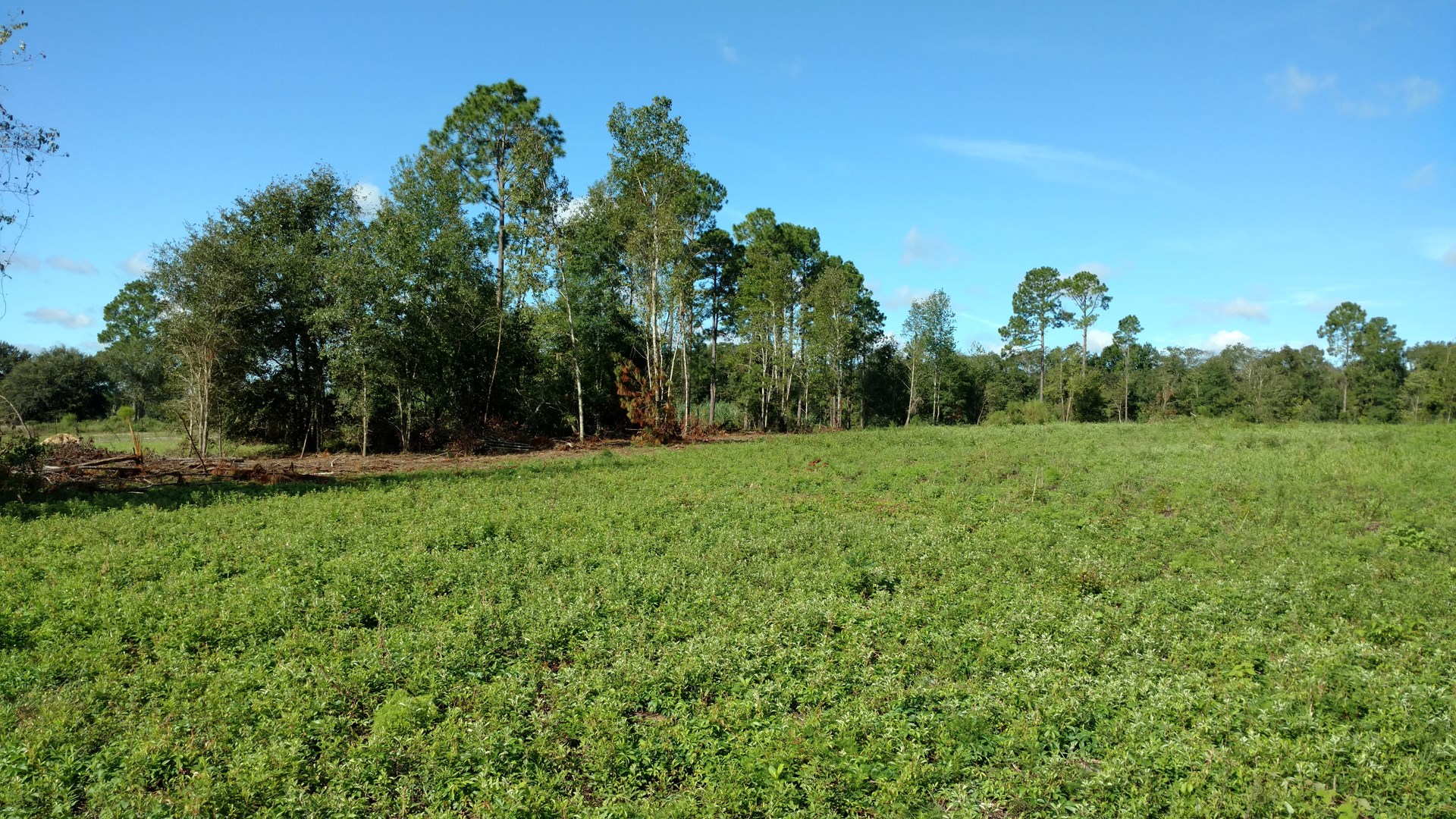 30 ACRES FOR SALE IN NORTH CENTRAL FLORIDA