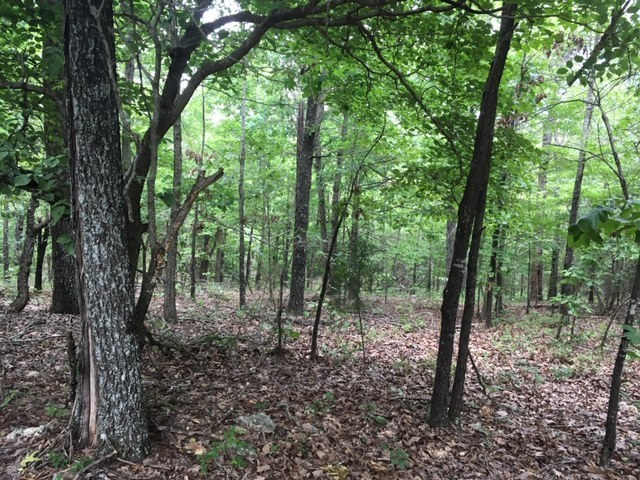 Ozarks Woodland for sale