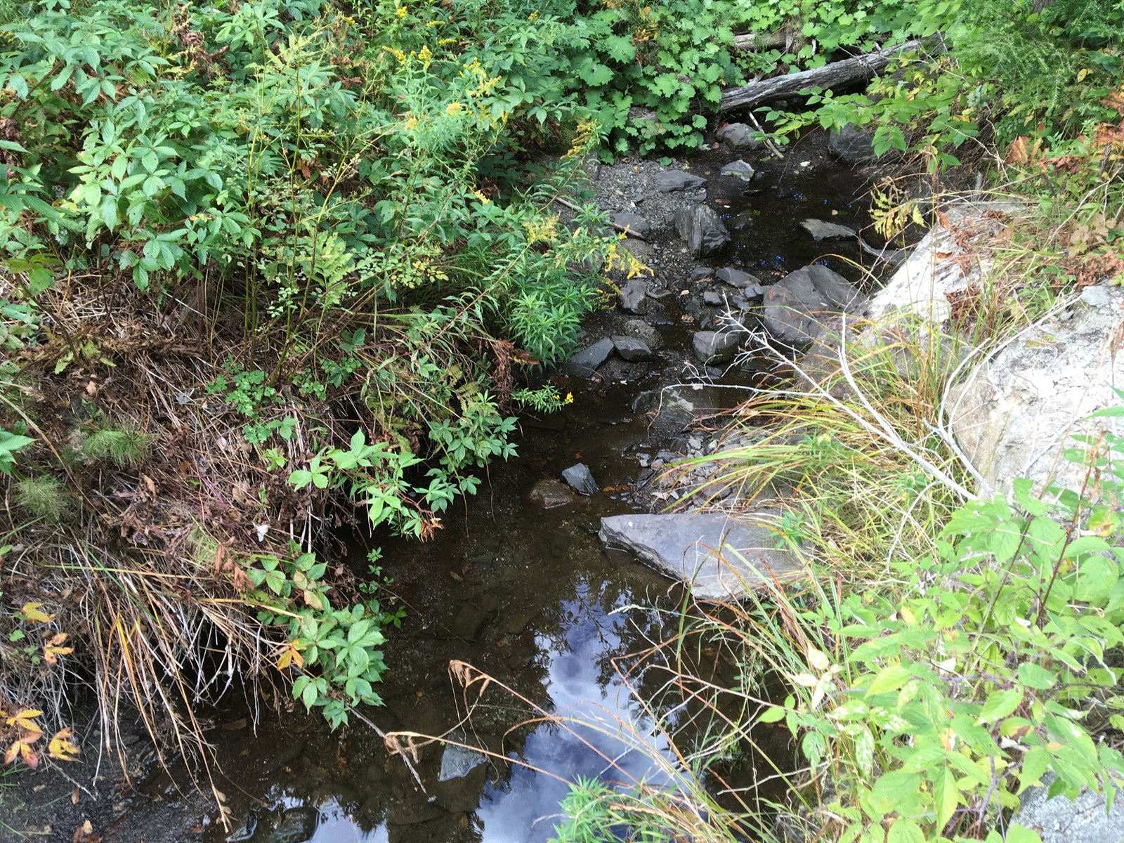 Off Grid Bug Out Land with Trout Stream