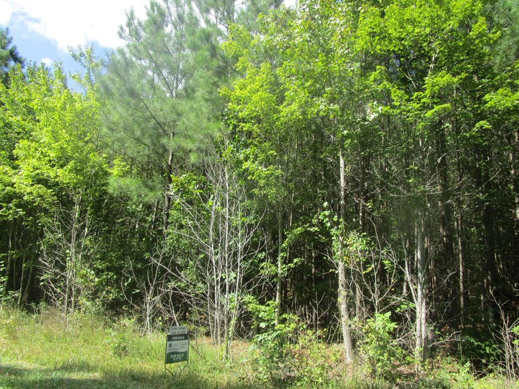 Wooded Tract In Southern VA