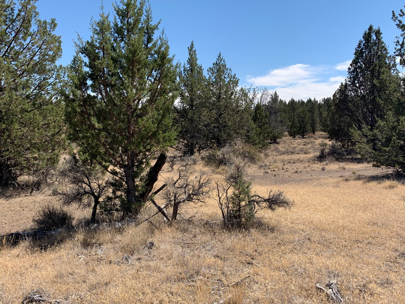 Vacant Land on 1+/- Acres For Sale