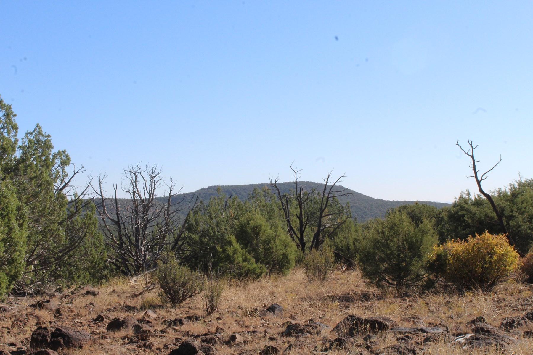 Large Land Borders Public Land on 2 Sides in Seligman aZ