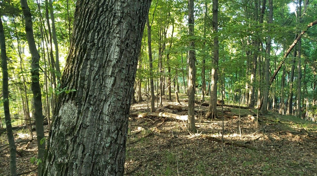 Hunters dream 34.51 acres with Big Timber in Adams County Oh