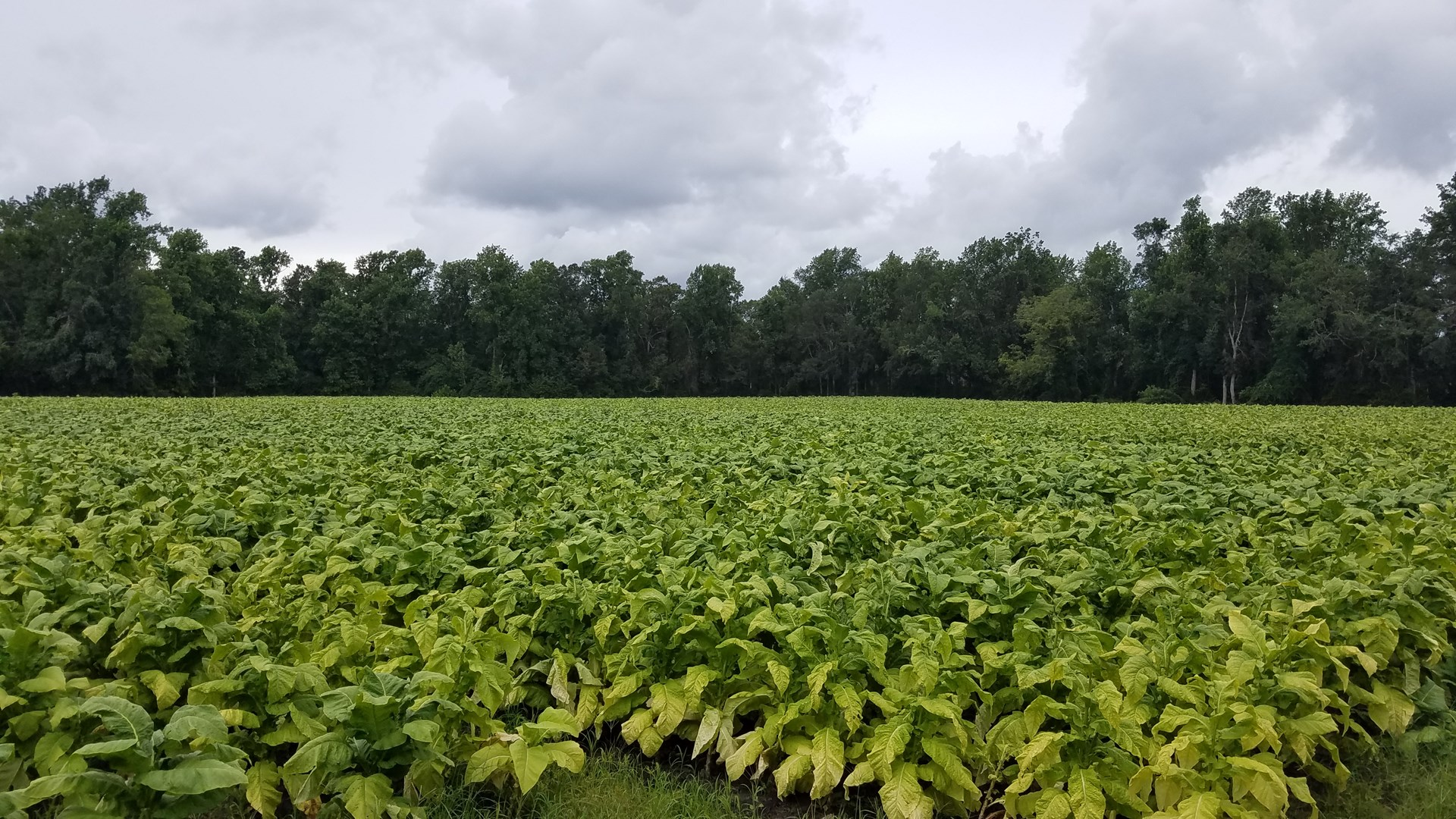 Farm And Timberland For Sale in Pamlico County, NC