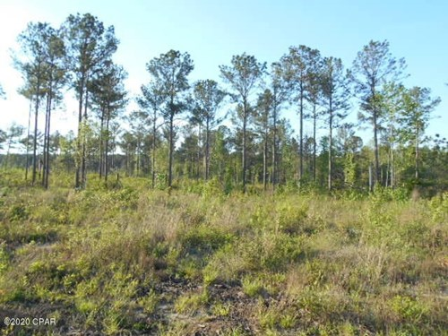 Hunting Land For Sale in Jackson County, Fl.