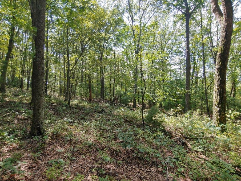 Recreational Land for Sale in Floyd VA!