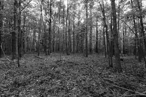 80 +/- Acres Lewis County TN