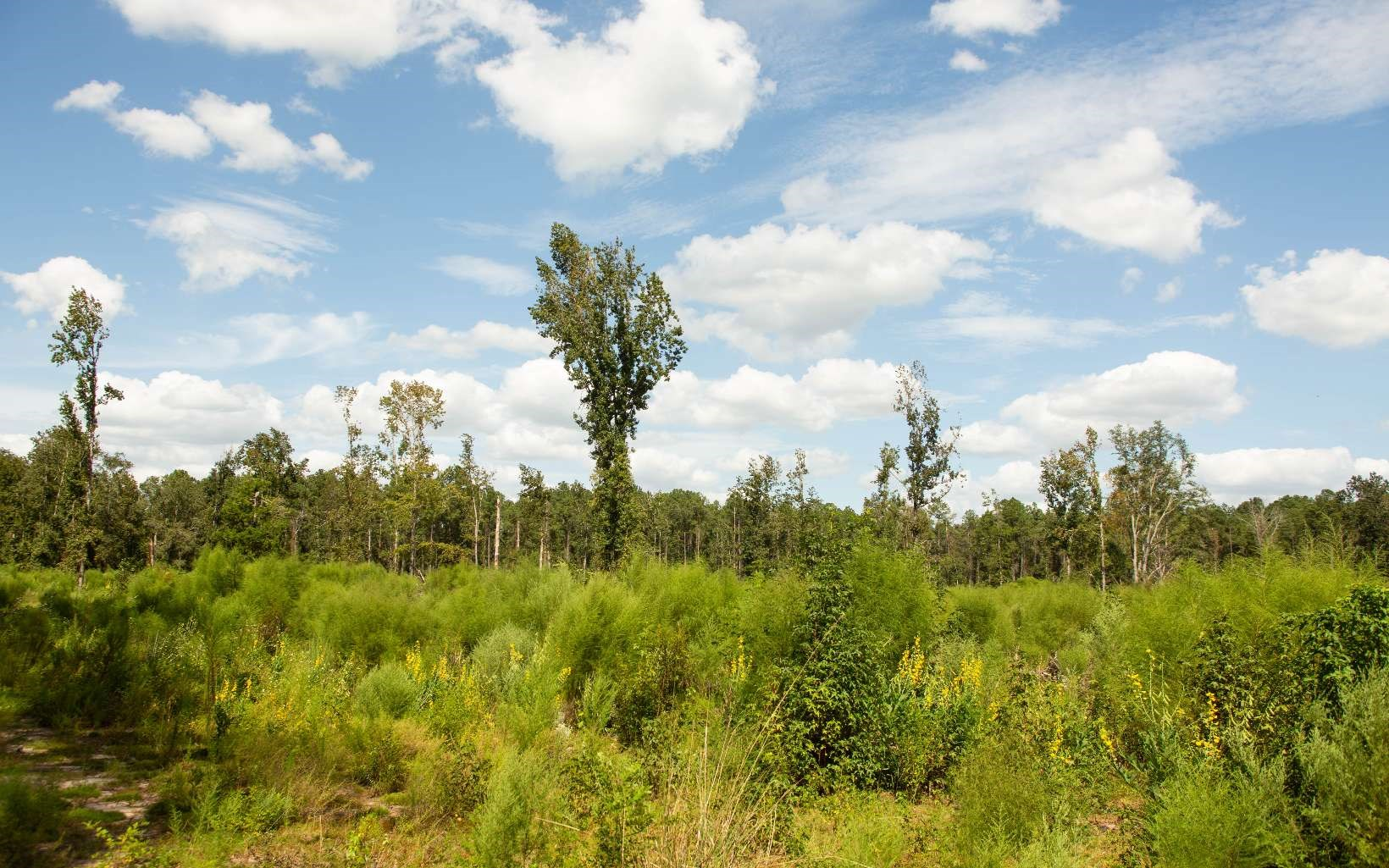10 acres, no deed restrictions!