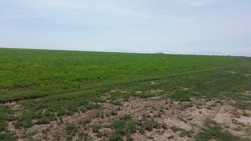 Farm in Tularosa, NM