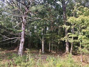3.5 ACRES LAND LOTS FOR SALE,  HOME SITES STARKVILLE, MS