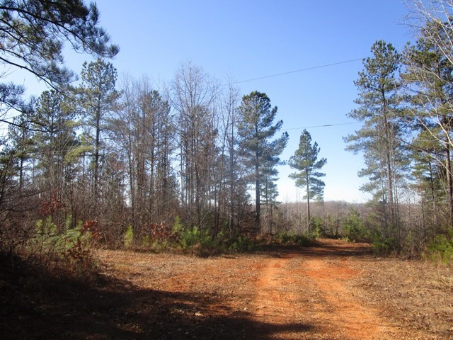 Acreage To Build And Hunt In Southern VA