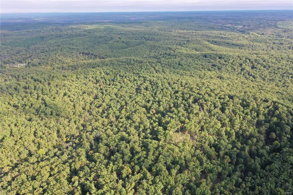 40 acres joining National Forest, perfect for Hunting.