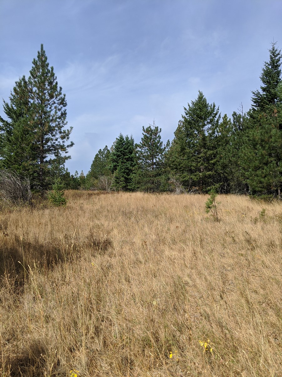 10 Acres Near Lake CDA And Lake Pend Orielle
