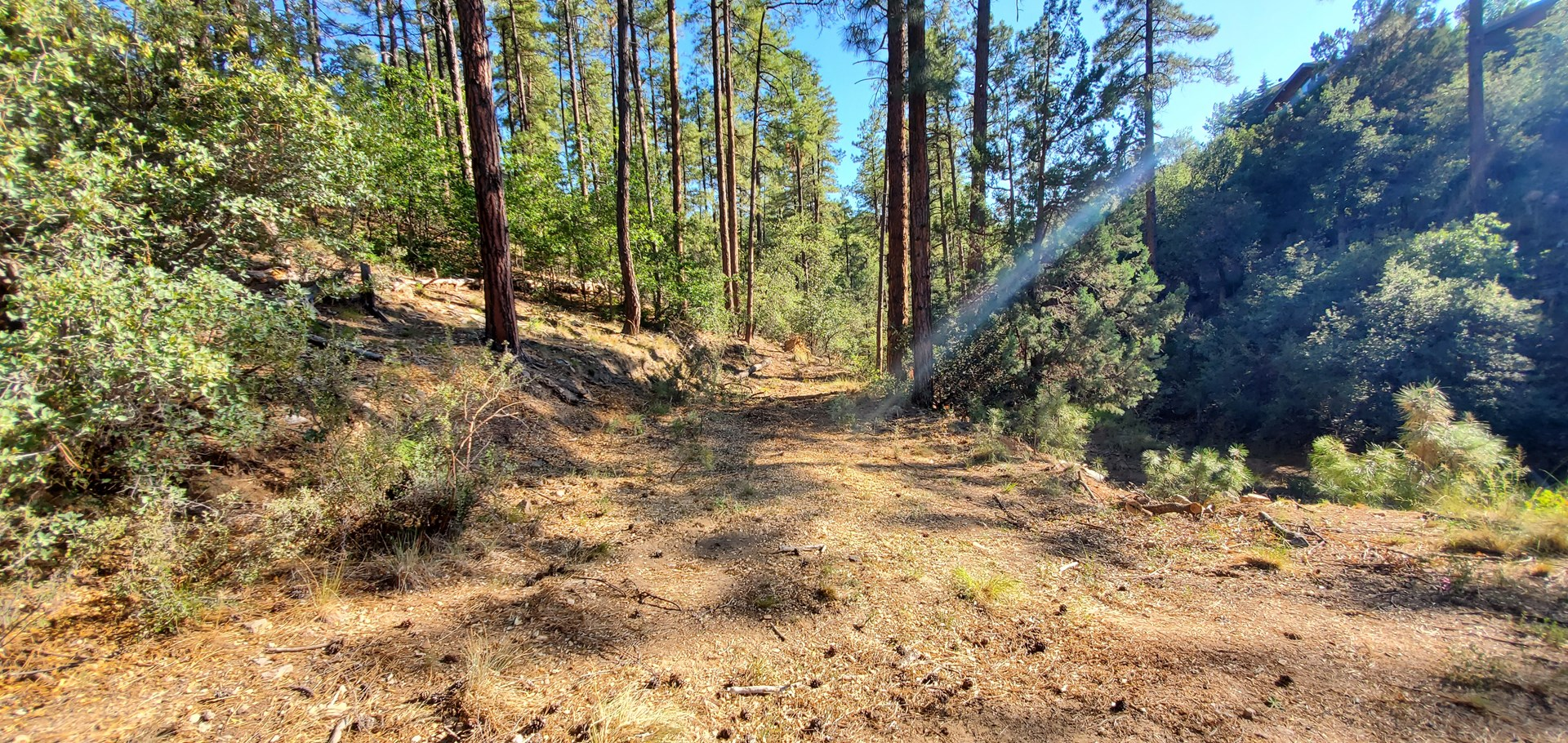 Wooded Pines, Forest Area, No HOA