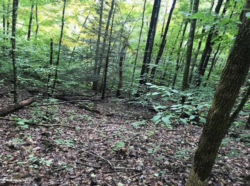 Tennessee Land for Sale At Auction Hancock County TN 37811