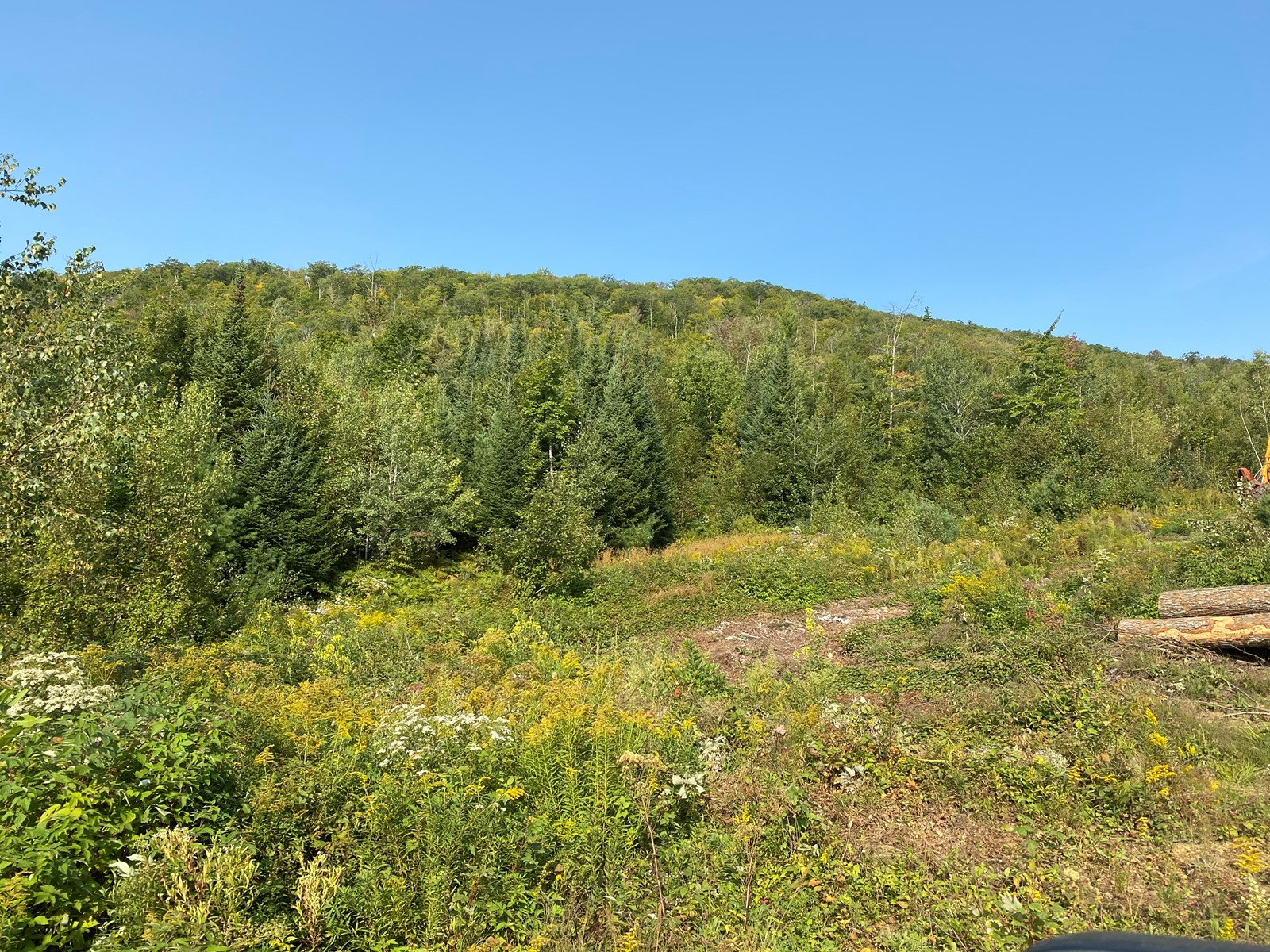 Land for Sale in Dixfield, ME