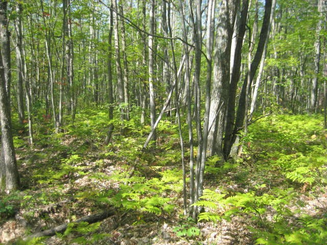 Hunting Property - 20 Acres Atlanta MI