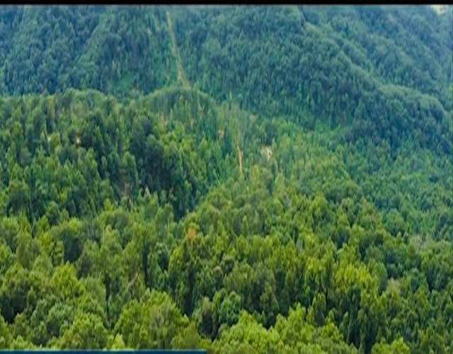 East Tennessee Auction Hawkins County Woodland for Sale