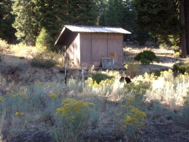 Old Home Stead For Sale in Northeastern CA