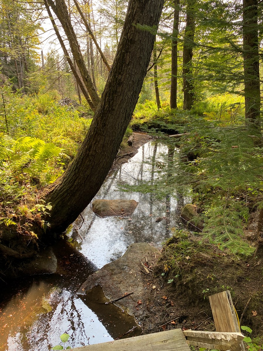 159 Acres of Mixed Wood Forest and Waterfront