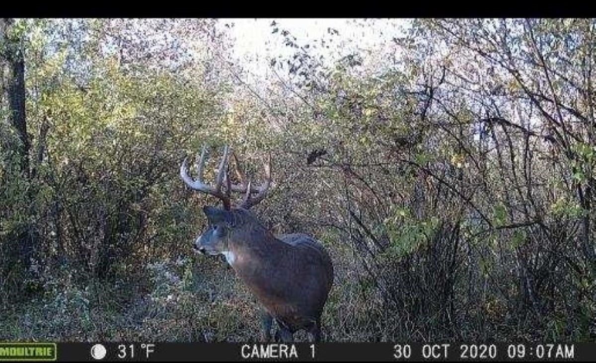Columbia County 47 acre Hunting and Building Parcel
