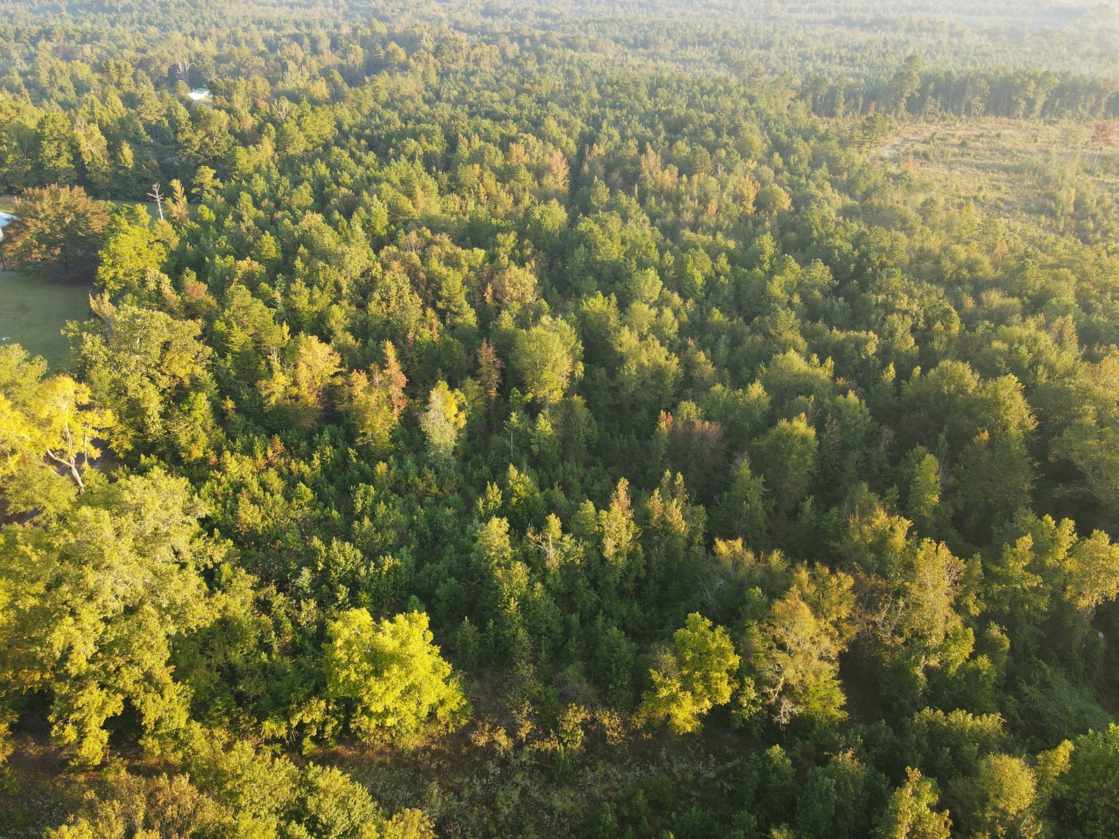 East Texas Timberland, Hunting Land,  For Sale Cass County