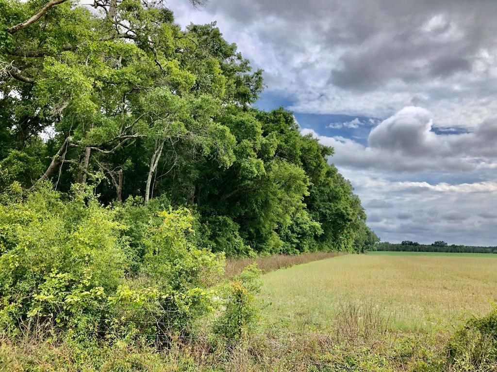 20 ACRES IN BRANFORD, FL -