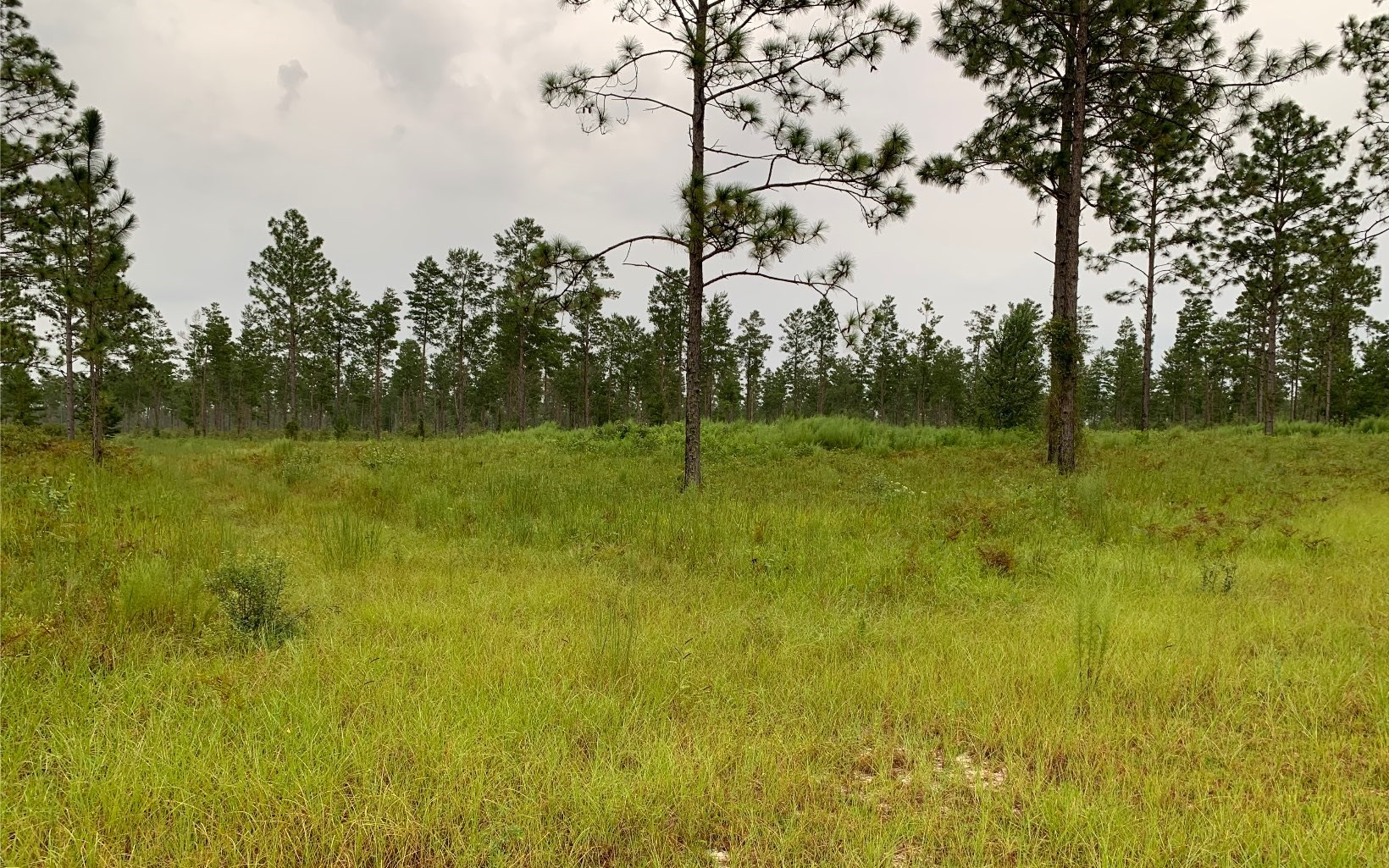 40 acres in Lee Florida on a paved road.