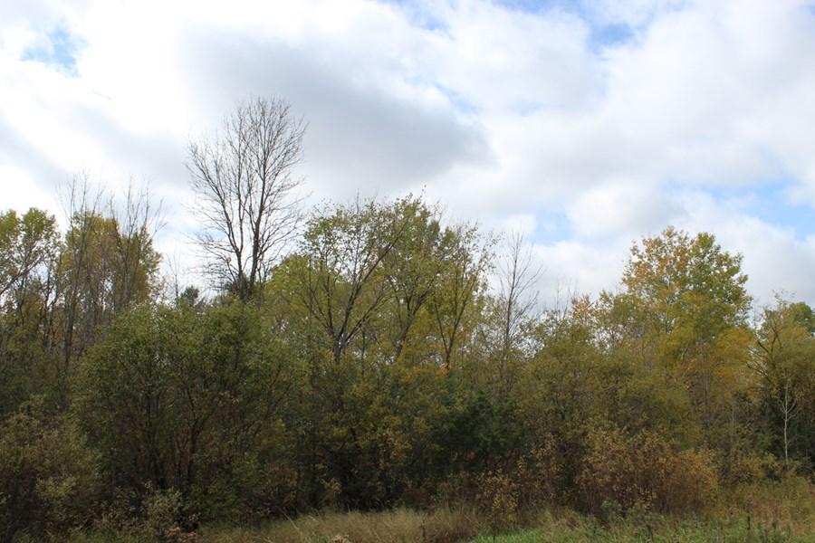W 40 acres
