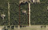 5 wooded acre off a paved highway