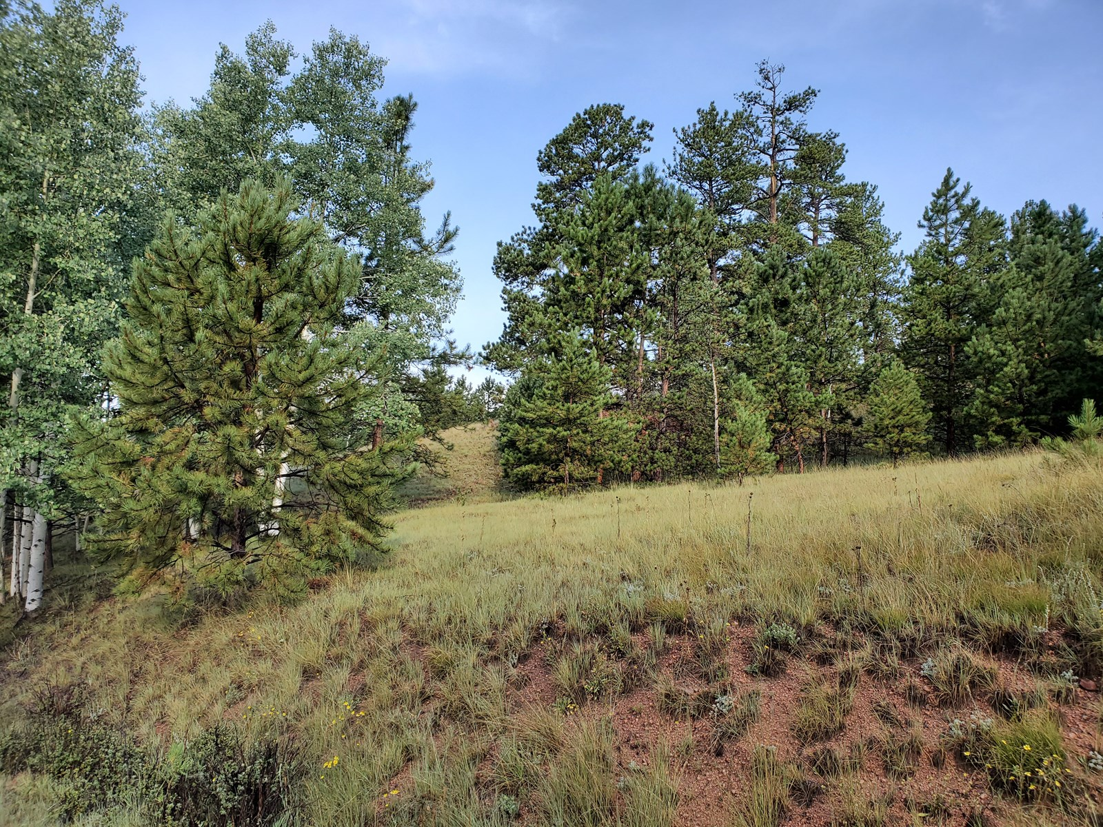 Vacant land Wooded Teller County CO National Forest Hiking