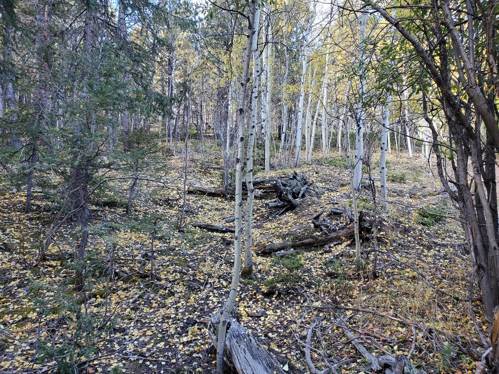 Vacant land Wooded Teller County CO State Parks  Hiking