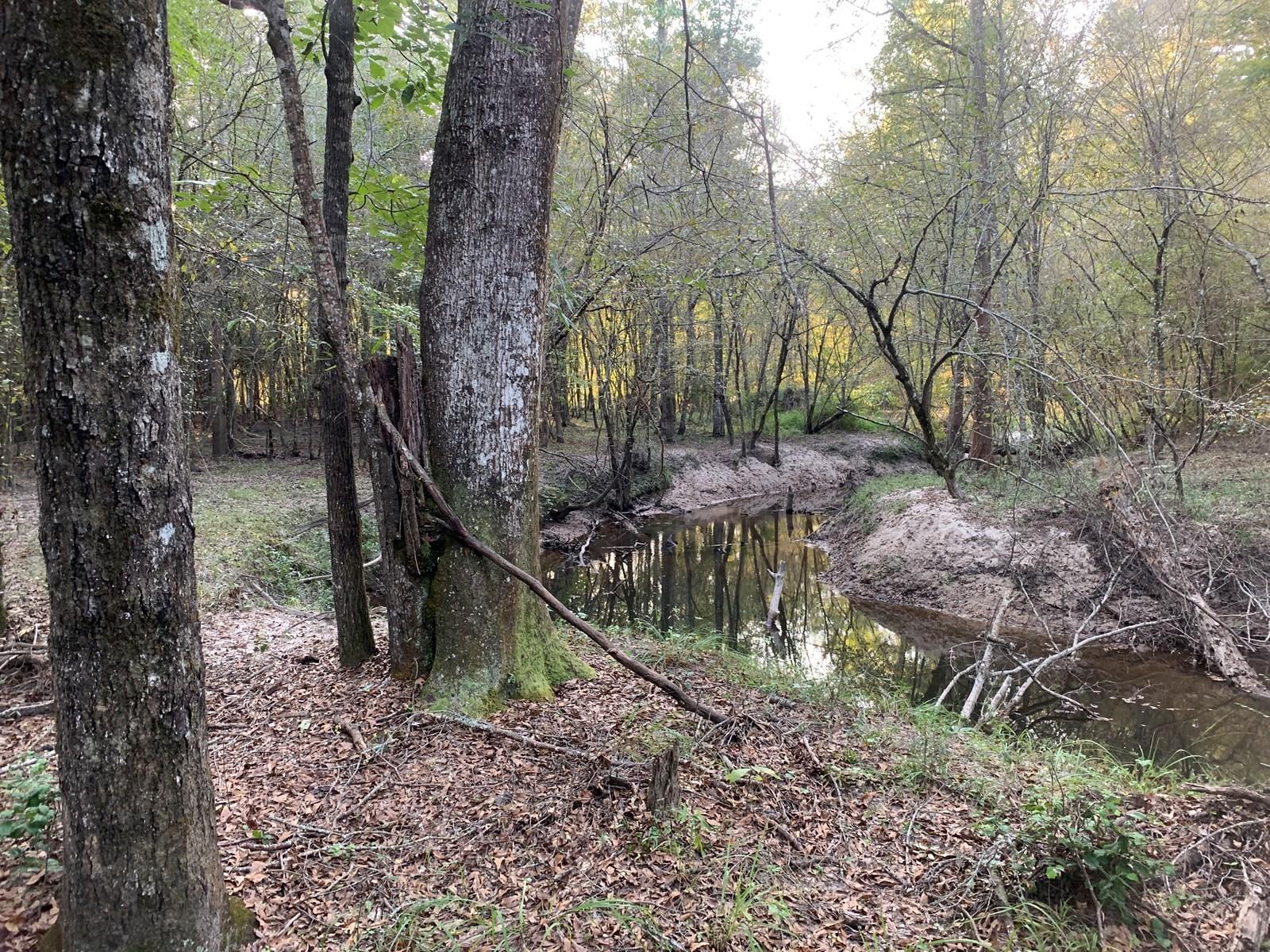 Hardwood Creek Land W/ Road for Sale near El Dorado, AR
