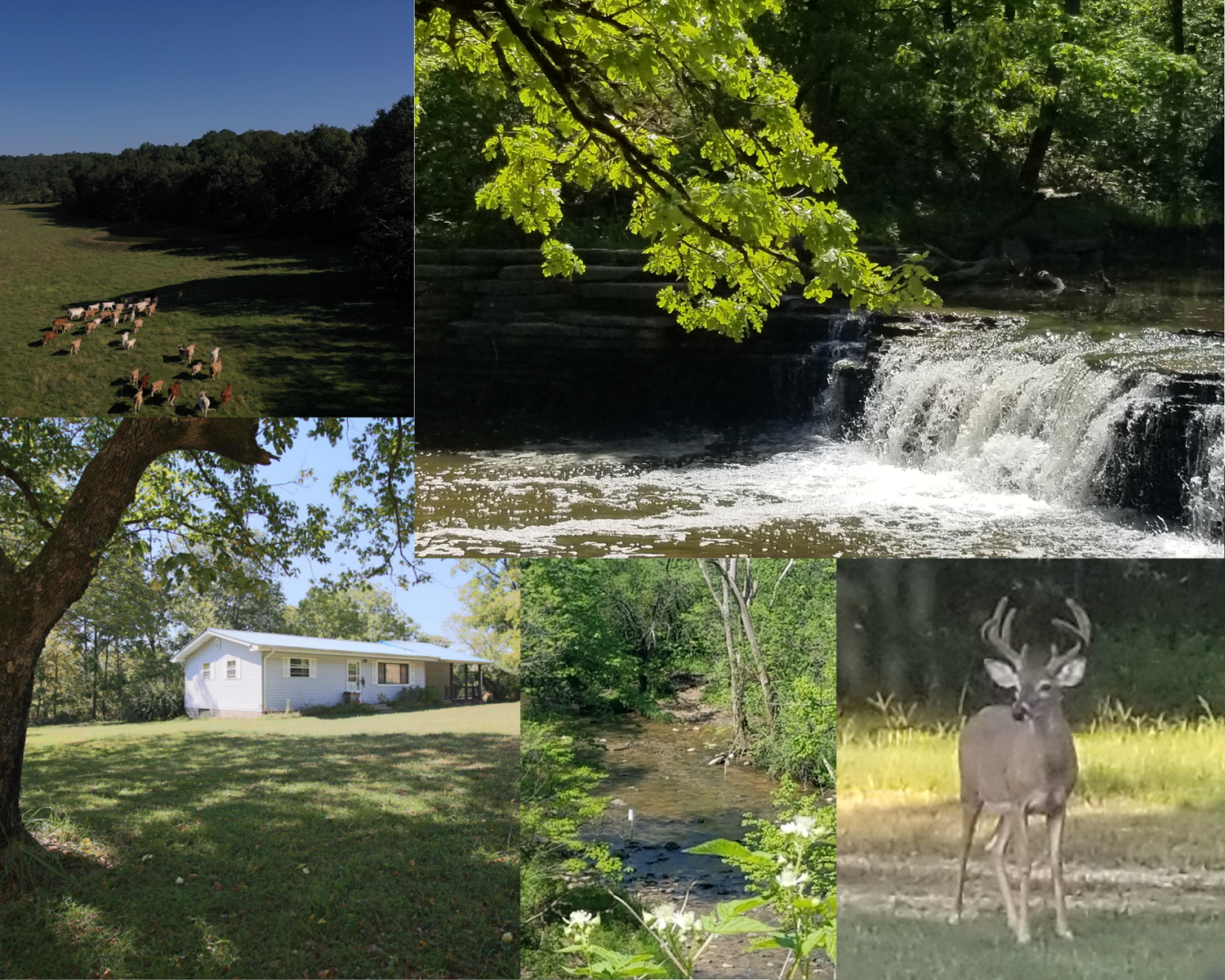 645 Acre Ranch with Live Water and Mature Timber Southern MO