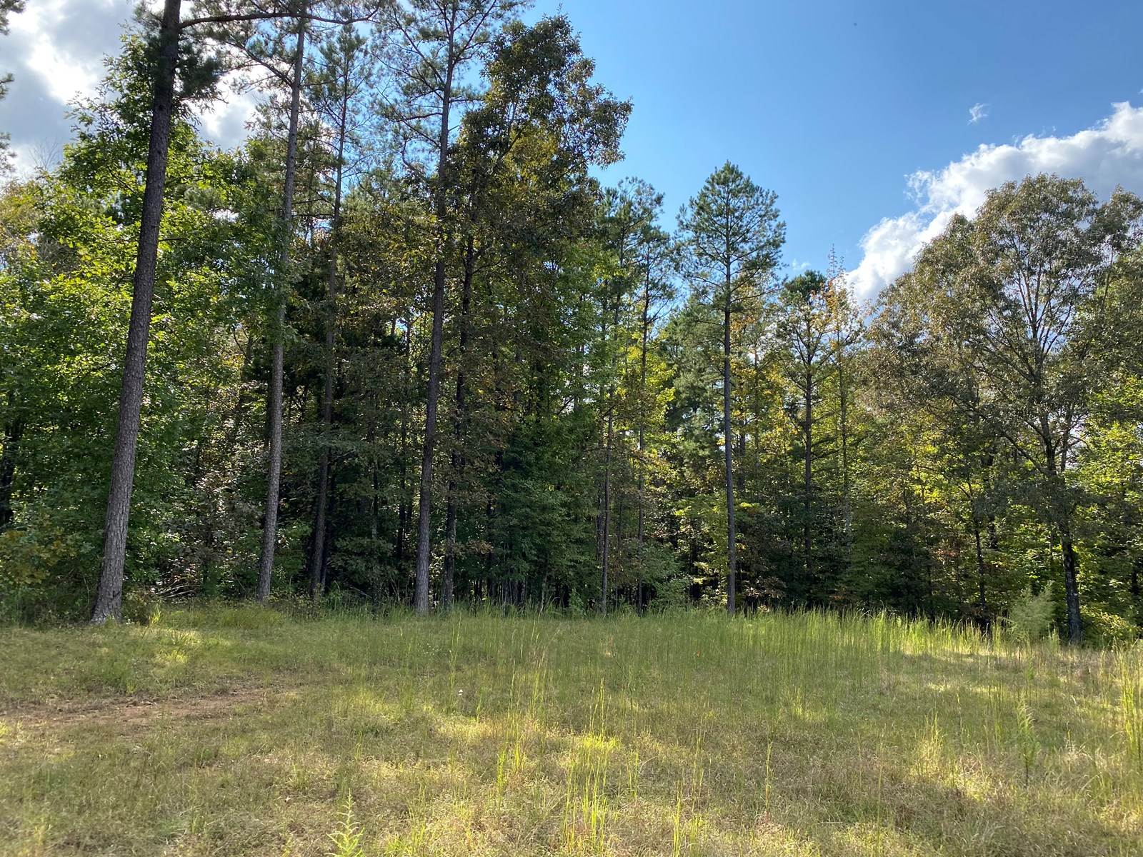 5 ACRES OF LAND FOR SALE IN TN, CLEAR BUILDING SITE, PRIVATE
