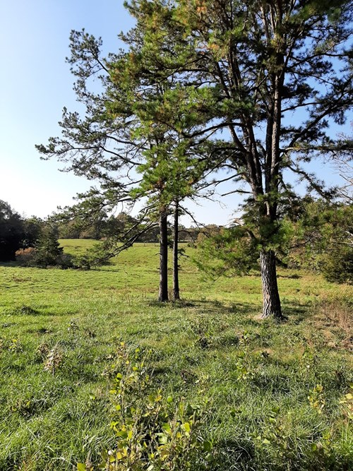 37 acres nestled in the Heart of the Ozarks